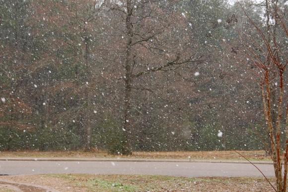 snow feb 10 020.jpg